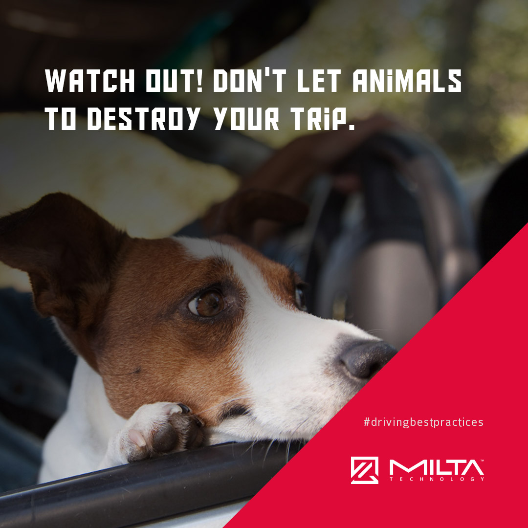 Watch out! Don't let animals to destroy your trip MILTA Technology